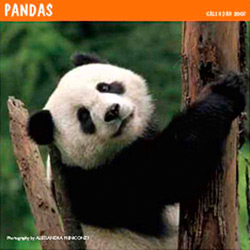 PANDA-COVER.jpg