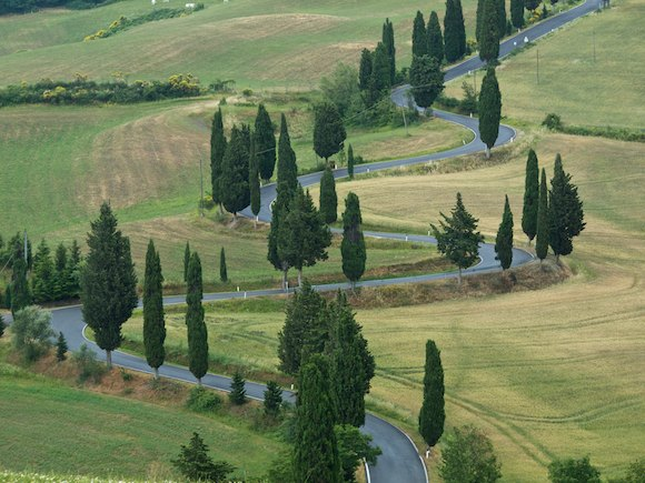 twisty road with cypresses